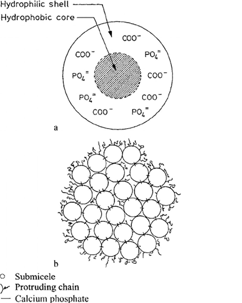 Temperature-dependency-of-the-aggregation-rate-of-para-casein-micelles-rate-constant-k.jpg